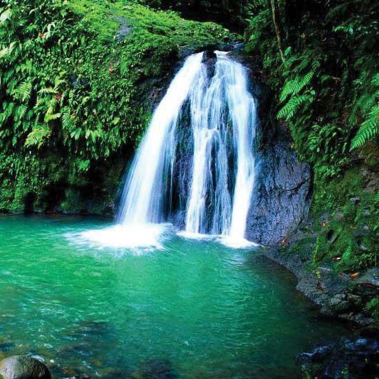 Visite du parc national de la Guadeloupe
